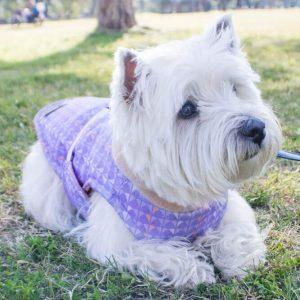 abrigo de invierno para perros estilo miami