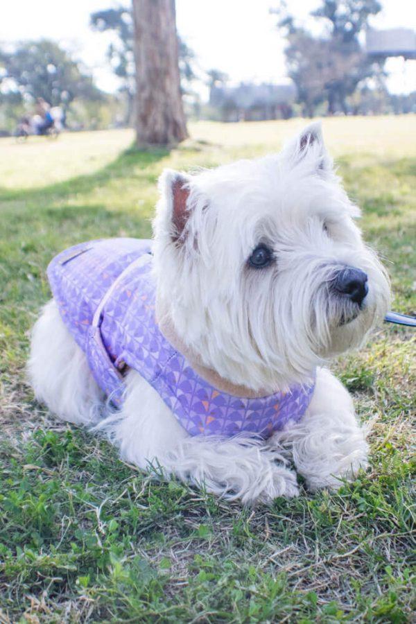 dog coat Miami Style