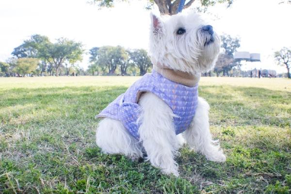 dog winter coat barki