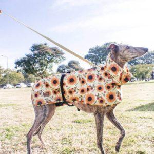 piloto de lluvia para perro